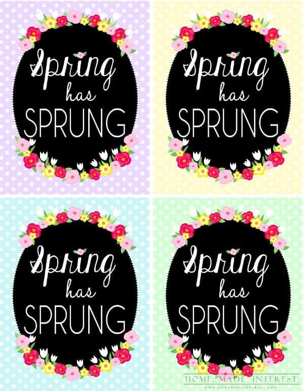 spring_sprung_4