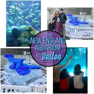 Must See Exhibits at the Boston Aquarium