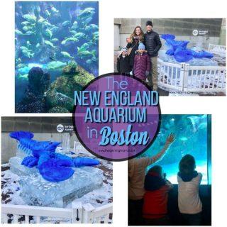 Must See Exhibits at the Boston Aquarium