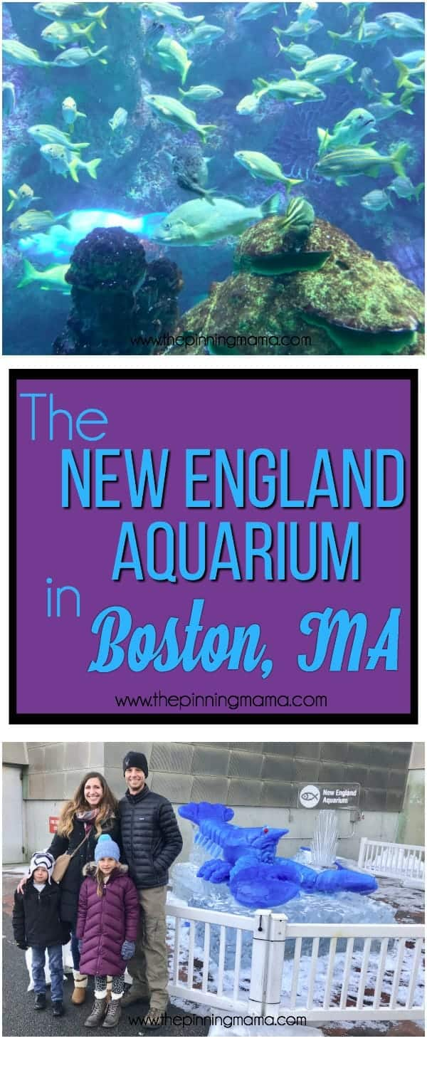 The family guide of The New England Aquarium in Boston, MA.