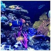 Tropical Aquariums at the Boston Aquarium