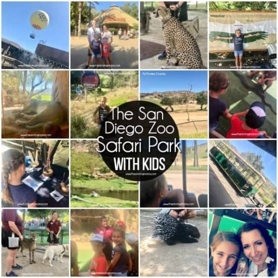 What to do at the San Diego Zoo Safari Park with Families.